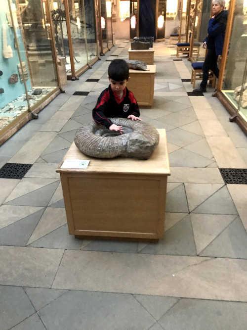 Dítě hmatem zkoumající amonit (Titanites giganteus) - Doteková prohlídka (Touch Tour)